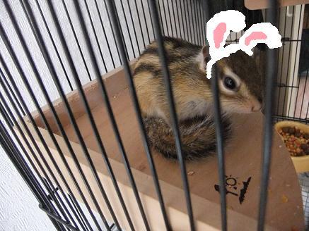 DSCF0470ウサギ