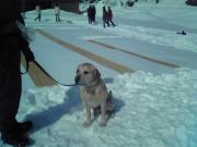 雪さらし リックス
