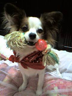 おもちゃ大好き