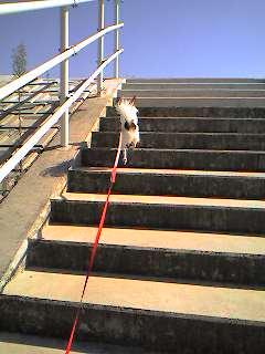 こんな階段、楽勝~よ!