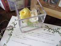アニコムのお花