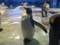 キングペンギン 置物?