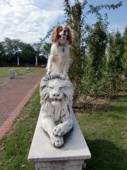 ライオンに乗ったぞ!