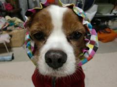 赤頭巾のおばあさん…