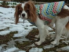 雪に困ってます