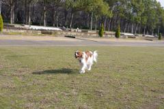 ボールと走る!