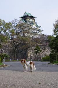 大阪城とロック」