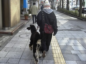 ほこりまんの散歩