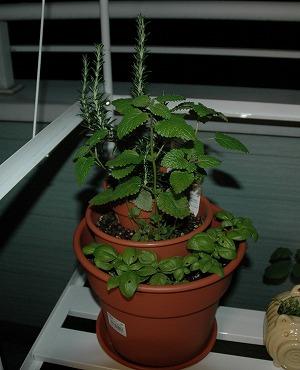 植木鉢革命