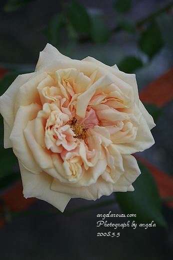 ro~bouquetdor2