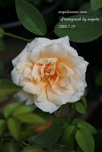 ro~ladyhillingdon8