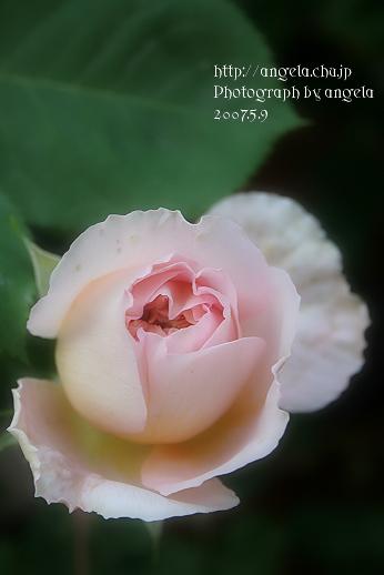 re~sweet1.jpg