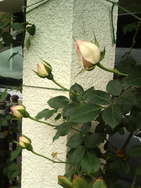 20100520164213.jpg