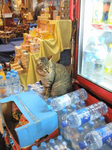 大量に売られる水(と猫)