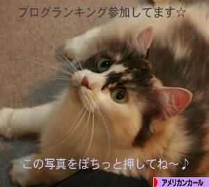 080914pochi.jpg