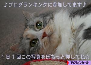 080917pochi.jpg