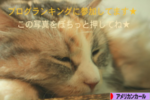 080927pochi.jpg
