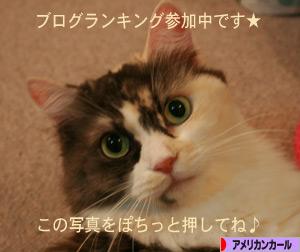 081001pochi.jpg