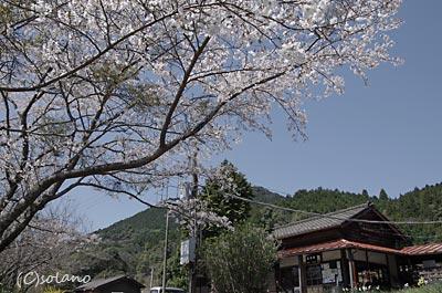 肥薩線、真幸駅。木造駅舎と満開の桜。