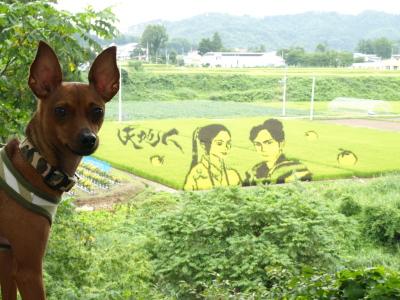 アクア with 田んぼアート2009@小野川温泉