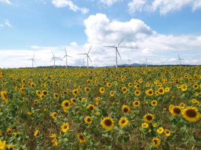 風車&ひまわり畑@郡山布引風の高原