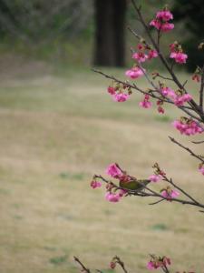 1.26桜6