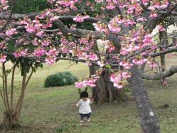 1.26桜7