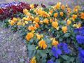 散歩途中の花