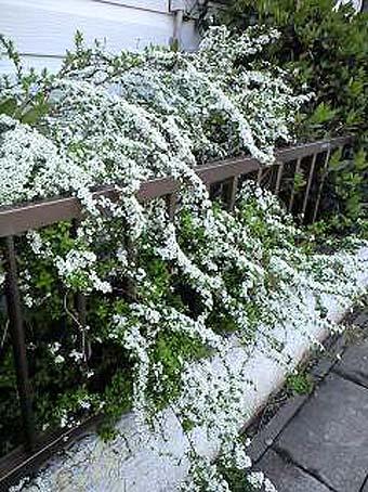 yukiyanagi_20120409100119.jpg