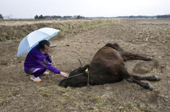 福島原発避難地区の家畜