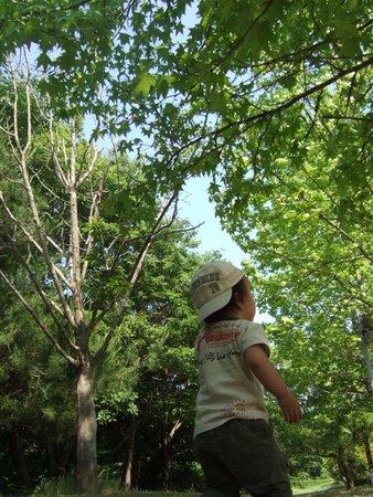 三木森林公園 079