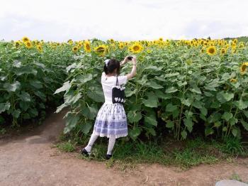 20090730_ヒマワリ