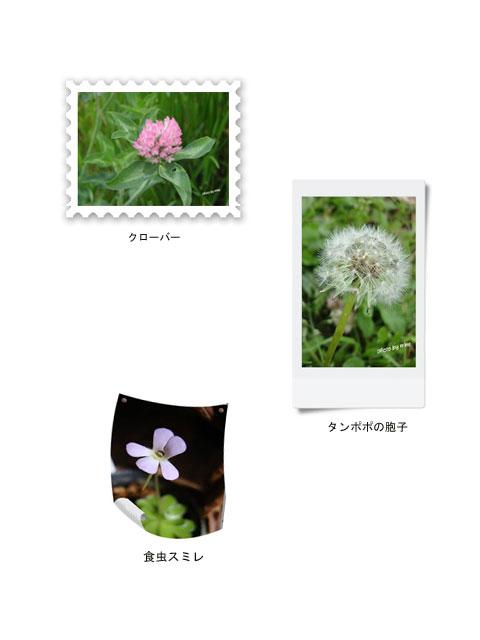 shiawase-2