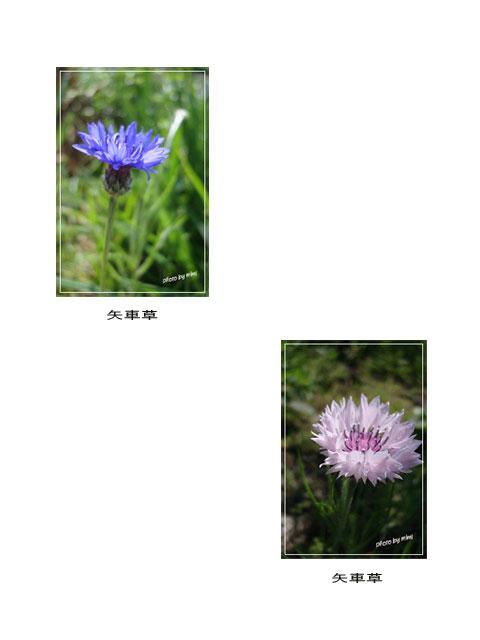 shiawase-1