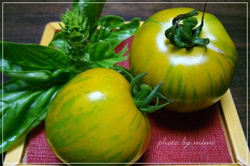 トマトグリーン ゼブラとバジル