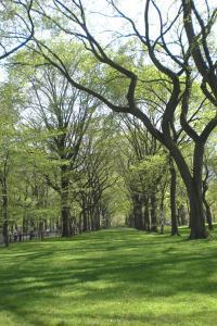 Central-Park-april09-016.jpg