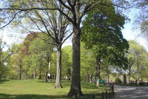 Central-Park-april09-022.jpg