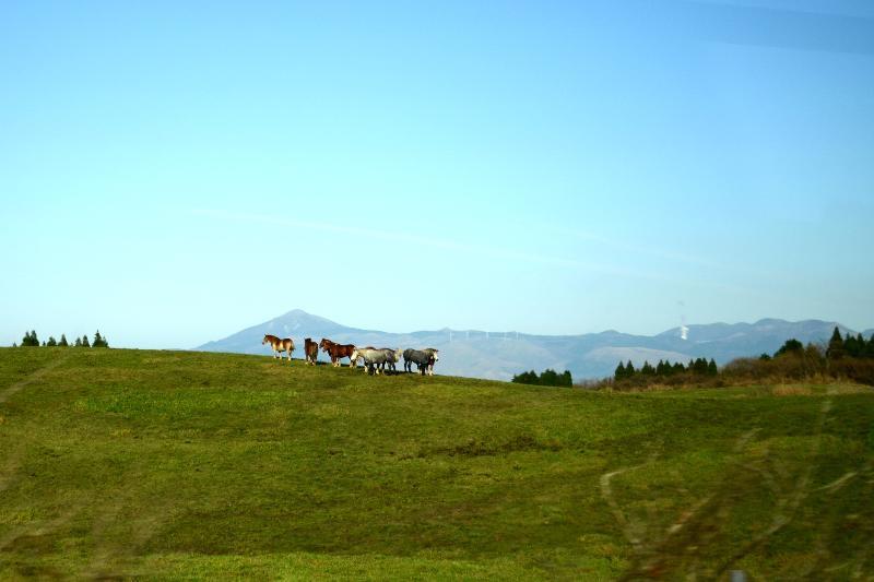 やまなみハイウェイから黒川温泉方面 草原の馬