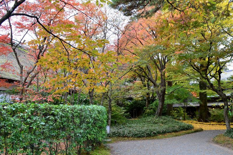 大分県由布市湯布院町  亀の井別荘周辺 紅葉景色