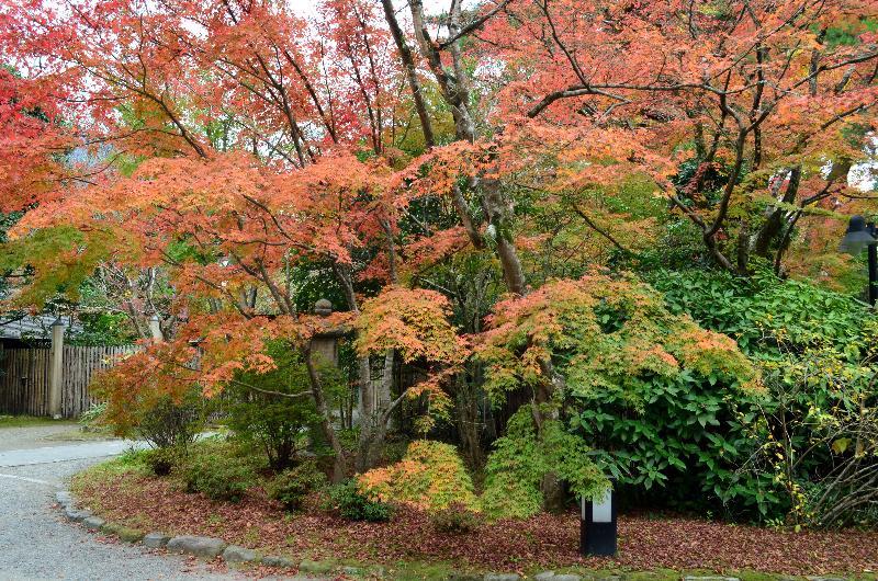 大分県由布市湯布院町  亀の井別荘付近 秋景色
