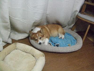 2009_0104ichi0079.jpg