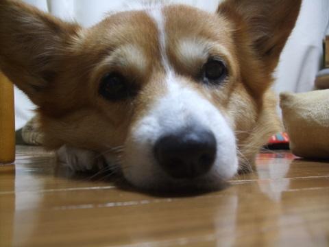 2009_0112ichi0004.jpg