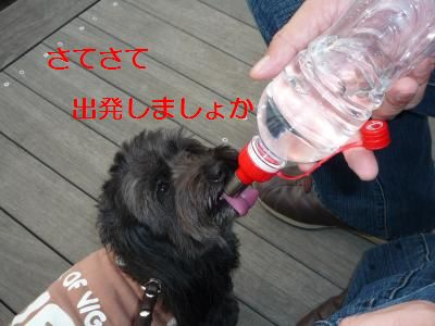 くろまめ11