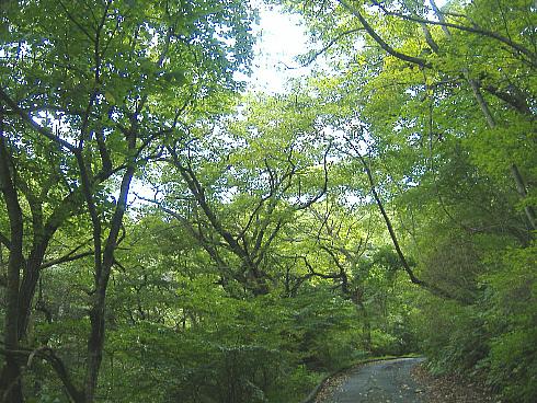 090913-4野鳥の森