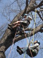 treeclimbing_teatime_miyoshi.jpg