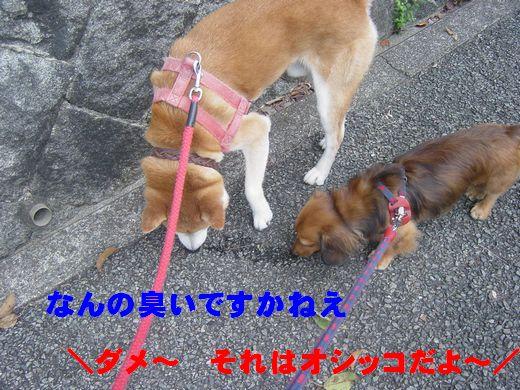 DSC01699.jpg