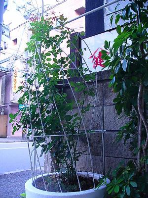 20050717.jpg