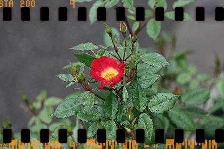 frame83f93144a1f9de4af23d2dc0b7489b25.jpg