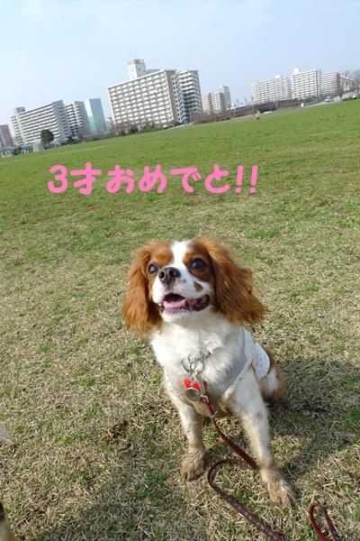047_20100325000407.jpg