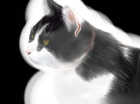 リアル猫ブログver